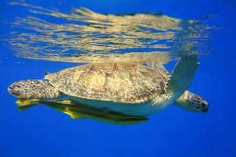 Łeba Atrakcja Oceanarium Dolphin House